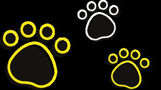 dog-exercise-areas