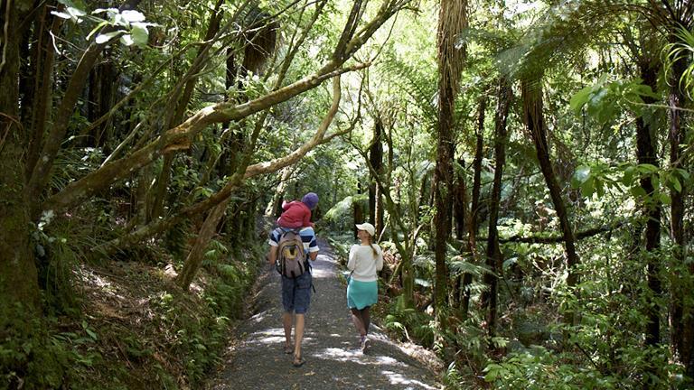 Bridal Veil Falls scenic walk is located near Raglan in the Waikato